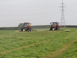 Baleage Hay and Silage for sale